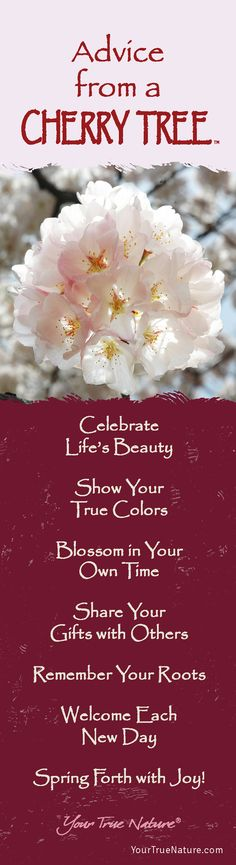 """Mother Advice from a Cherry Tree: """"Remember Your Roots."""" Your True Nature"""