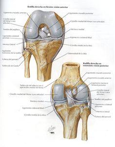 Créditosa: Atlas de Anatomía Humana Netter 2da. Edición