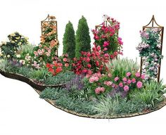 Как совместить розы и другие растения на участке