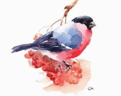 Bullfinch rojo imprimir pájaro en una rama con bayas de