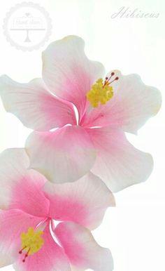Hibiscus delicade