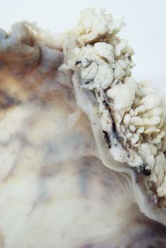 dead-sweet-art: 'YOUR CORPSE IS BEAUTIFUL XXIX'By Mia-Jane Harris