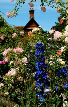 Mottisfont Abbey & Gardens.  The Rose Garden houses the National Collection of Old Fasioned Roses and the odd Delphinium!