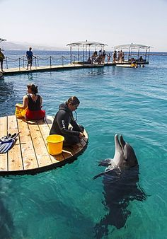 The Dolphin Reef, Eilat, Israel, Middle East