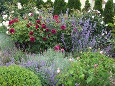 Rosen und Kräuter - Wohnen und Garten Foto