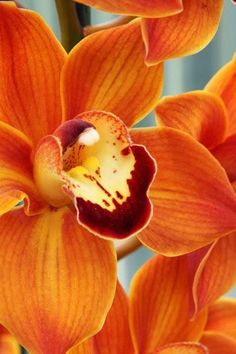 flowersgardenlove:  Orange Orchids Beautiful gorgeous pretty flowers