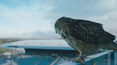 Sheffield Wednesday official video