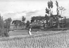 Photo by Jung hae chang, a woman carrying lunch box of her family on the field. Vintage Photographs, Vintage Photos, Time In Korea, Korean Photo, Korean People, Korean American, Korean Traditional, Daegu, Old Pictures