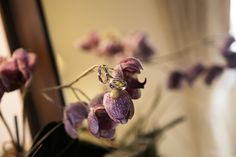 A detail of a purple orchid