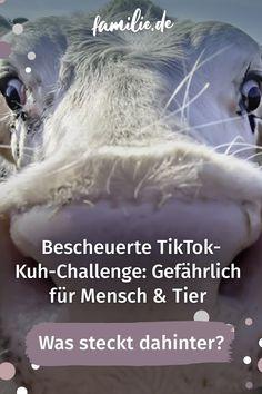 Nicht jede Challenge auf Tiktok ist nur amüsant. Leider entwickeln sich gerade die gefährlichen Kurzvideos schnell zum Internet-Hit: Kühe erschrecken. Diese neueste Challenge bringt jetzt die Landwirte auf die Barrikaden, denn Jugendliche gefährden dabei ihre Gesundheit und die der Tiere. Also: Bitte nicht nachmachen! #tiktok #challenge #gefährlich #unsinn #landwirtschaft #kuh #scaringcowchallenge #stress #tierquälerei #sozialemedien #verantwortung #gesellschaft #bittenichtnachmachen Stress, Challenge, Internet, Agriculture, School Children, Young Adults, You're Welcome, World, Health