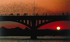 Congress Bridge, Austin - Amazing sunset! If you go at dusk, you can watch all of the bats fly out from under the bridge.  It's pretty cool.