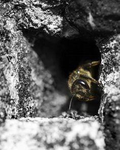 #macro #photography #bee #madeby@fullyshaped