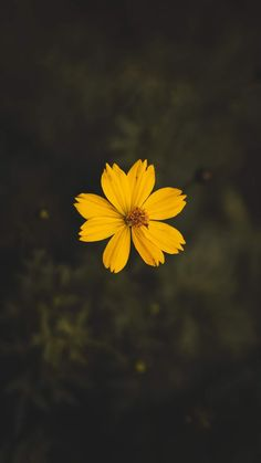 Yellow cosmos flower close-up photography · free stock photo Wallpaper Sky, Aesthetic Iphone Wallpaper, Aesthetic Wallpapers, Cute Home Screen Wallpaper, Yellow Flower Wallpaper, Sunshine Wallpaper, Wallpaper Maker, Happy Wallpaper, Beautiful Wallpaper
