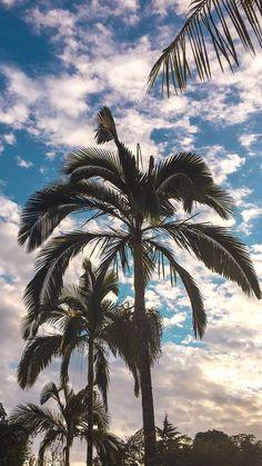 36 ideas for palm tree wallpaper iphone beach beautiful