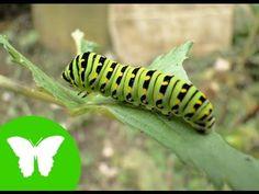 ▶ La Eduteca - Los invertebrados - YouTube