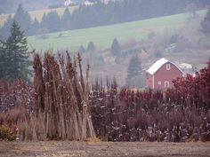 The beauty we enjoy at our tree farm in Vancouver, WA