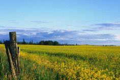 Alberta is my home. Never, will you be able to convince me that the prairies aren't pretty.