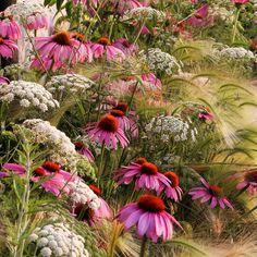 Prairie Planting, Prairie Garden, Meadow Garden, Pink Garden, Dream Garden, Flowers Perennials, Planting Flowers, Summer Flowers, Wild Flowers
