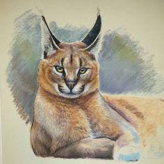 A serious cat Pastel pensils on pastelmat, A3. #zeichnung #рисунок #portrait #pastel #catdrawing #cat #katze #кошка #wip #art #drawing #moanart #wildcat #wildlife #pastelpencils #arts_help #drawingslovers #artofdrawing #caracal
