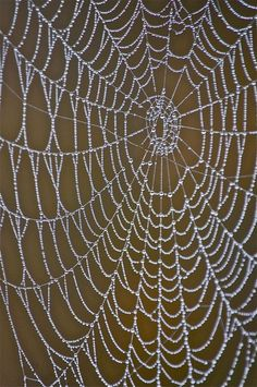 spider web with morning dew PHOTO:Robin Dance ~ PENSIEVE