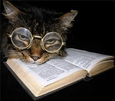 Smart kitty knows what to read. I Love Cats, Cute Cats, Funny Cats, Funny Animals, Cute Animals, Crazy Cat Lady, Crazy Cats, Chat Lion, Cat Reading
