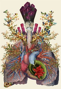 Travis Bedel's collages are created using anatomical imagery and science guides or textbooks images, then merging it into spectacular artworks.