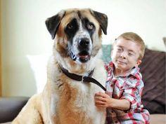La bellissima storia del piccolo Owen e il suo cane Haatchi 3 Legged Dog, Anatolian Shepherd, Train Tracks, Go Outside, How To Raise Money, Dog Training, Dogs And Puppies, Labrador Retriever, Pets