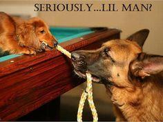 doggie tug of war...haha!