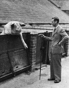 King George VI greets a very large pig on his farm in Windsor. Get premium, high resolution news photos at Getty Images Lady Elizabeth, Princess Elizabeth, George Vi, British Monarchy History, British History, Queen Mother, Queen Mary, Duke Of York, English Royalty
