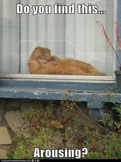 Seeexxxy kitty!