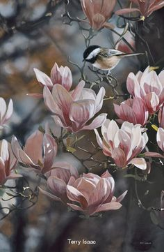 Terry Isaac...... In The Pink Chickadee