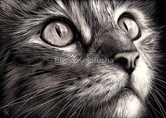30 Beautiful Cat Drawings - Best Color Pencil Drawings and Paintings - World Cat Day Aug 8 - 1 cat drawing elena Realistic Cat Drawing, Cat Face Drawing, Animal Paintings, Animal Drawings, Pencil Drawings, Disney Paintings, Art Scratchboard, World Cat Day, Black Paper Drawing