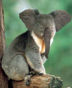 Hybrid Animals | Hybrid Animals As The Results of Photoshopped