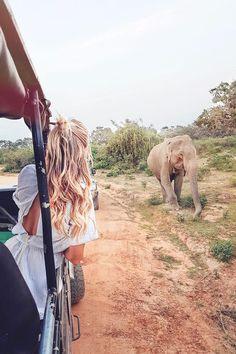 See elephants at Yala National Park I Sri Lanka