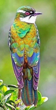 # BIRD