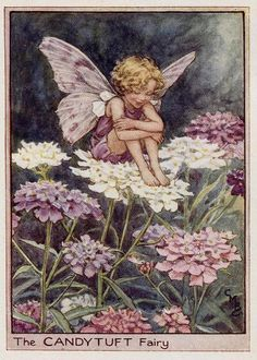 Items similar to Candytuft Flower Fairy Vintage Print, Cicely Mary Barker Book Plate Illustration on Etsy Cicely Mary Barker, Vintage Wall Art, Vintage Prints, Vintage Paper, Flower Fairies Books, Fairies Garden, Flowers Garden, Glitter Flowers, Garden Illustration