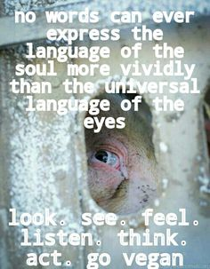 we cannot pretend not to understand their misery: look, see, feel, listen, think, act: go #vegan