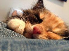 adorable new kitten