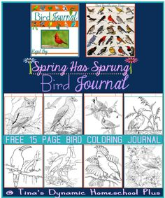 bird journal coloring pages collage