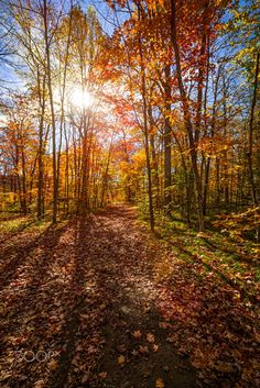 Sunshine in fall forest (Algonquin Park, Ontario) by Elena Elisseeva on 500px