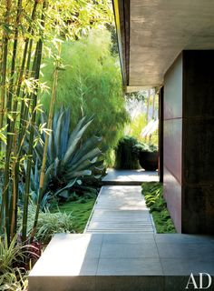 Contemporary Outdoor Space by Desiderata Design in Los Angeles, California #RealPalmTrees #GreatDesignIdeas #LandscapeIdeas RealPalmTrees.com #GreatViews #backYardIdeas #CoolLandscapes #DIYPlants #OutdoorLiving #FallIdeas #OutdoorIdeas #SummerIdeas