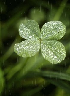 Rain - I'm looking over a 4-leaf clover...