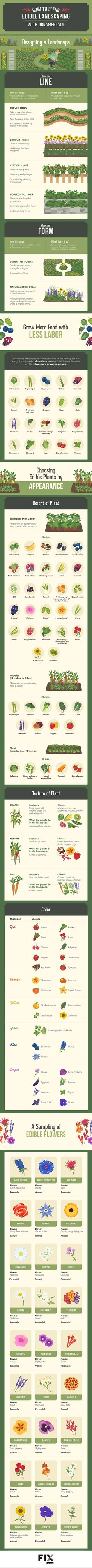 Check out How To Blend Edible Landscaping With Ornamentals [Infographic] by fix.com | pioneersettler #Garden #Flowers #Vegetables