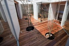 """Would be nice to have this """"tree treatment"""" - Sky catcher house - terrace"""