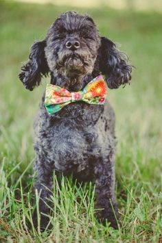 brightly patterned dog bow tie