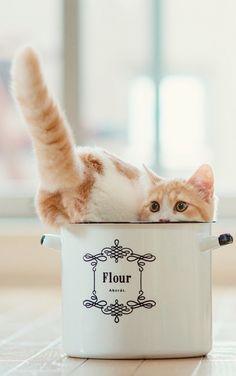 cat in small space - kitchen cat - cat humor