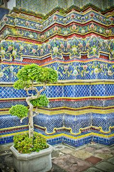 These little miniature trees are a popular tradition around Thailand - kind of like the bonsai is to the Japanese.