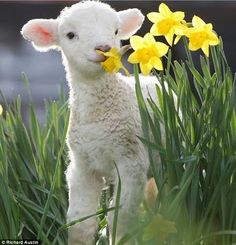 Spring in New Zealand!