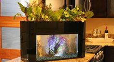 5 Ingenious Indoor Garden Ideas That are Perfect for Small Spaces: A Fish Aquarium with a Garden