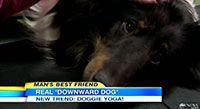 Dog Yoga - Doga